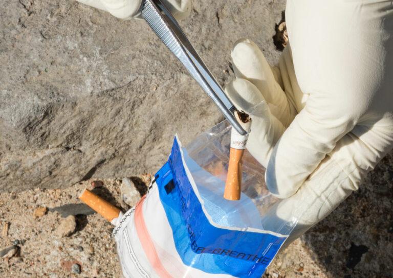 Zigarettenstummel wird als Beweismittel mit einer Pinzette in einen Beutel getan.