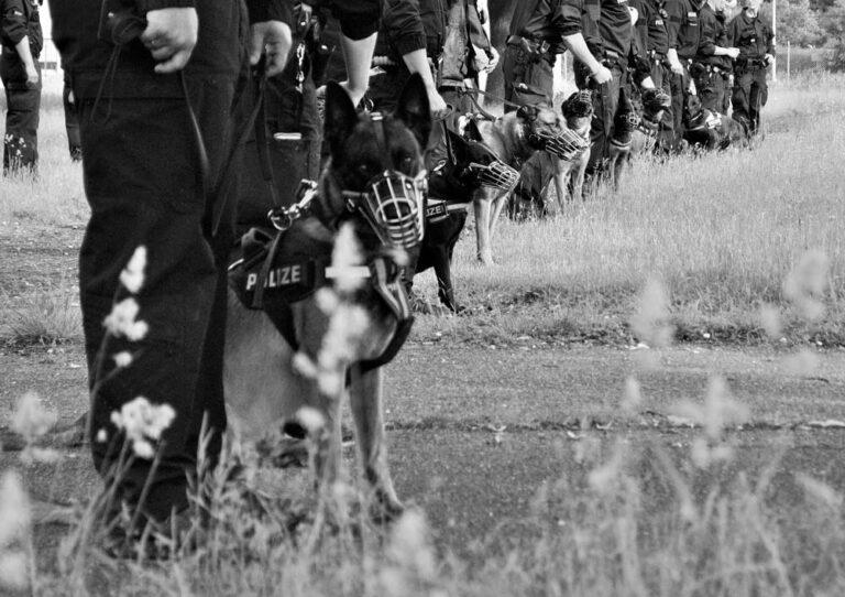Schwarz-Weiß-Bild - Viele Diensthunde mit Ihren Diensthundeführern auf einer Wiese